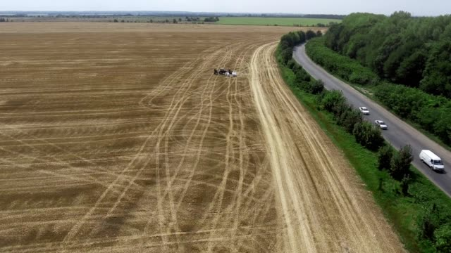 Aerial view of combine harvester. Harvest of rapeseed field. - vídeo