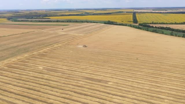 vista aerea della mietitrebbia raccolta raccolta grano raccolto - ucraina video stock e b–roll