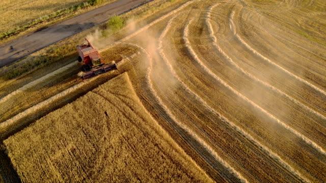 stockvideo's en b-roll-footage met luchtfoto van de combinatie harvester verwijdert gerijed tarwe en maakt turn in veld verlaten achter stapel droog stro - gerst