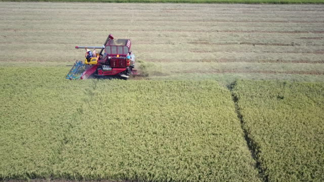 Aerial view of combine harvester working on field Aerial view of combine harvester working on field plow stock videos & royalty-free footage