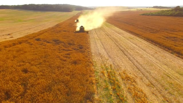 aerial view of combine harvester working on field. - colza video stock e b–roll