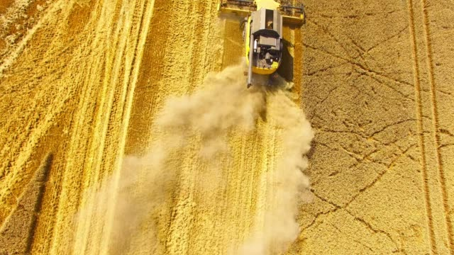 vídeos de stock e filmes b-roll de aerial view of combine harvester working on field. - crucíferas