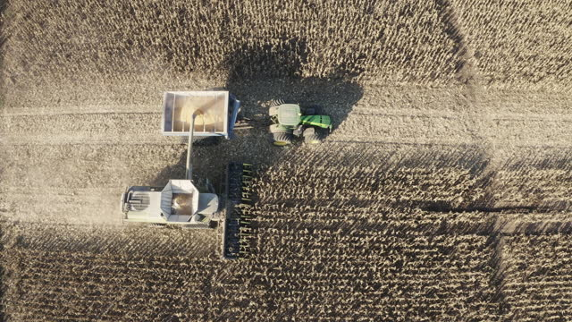 Aerial view of combine harvesting corn fields.