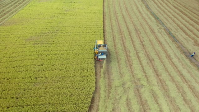 aerial view of combine on harvest field in ayutthaya, thailand - aerial agriculture stock videos & royalty-free footage