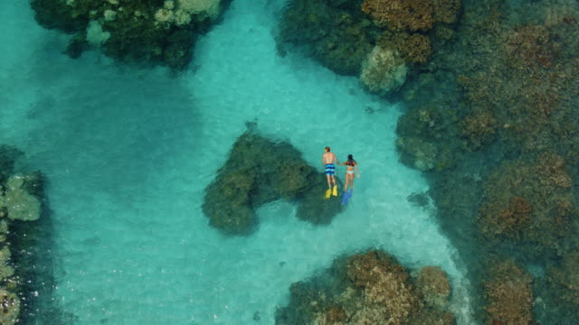Aerial View of Couple Snorkeling Cinematic aerial view of couple snorkeling over tropical reef in Hawaii aqualung diving equipment stock videos & royalty-free footage