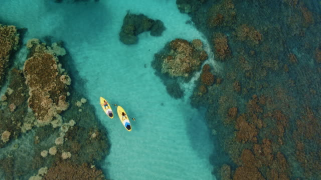 Aerial View of Couple Stand Up Paddling Cinematic aerial view of couple stand up paddling across tropical reef holiday stock videos & royalty-free footage