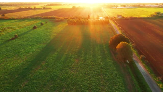 Aerial view of cultivated field at sunset,Chianti region, Tuscany, Italy