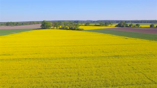 aerial view of cultivated land and rapeseed field near by damnatz in in the district lüchow-dannenberg in lower saxony - germany - colza video stock e b–roll