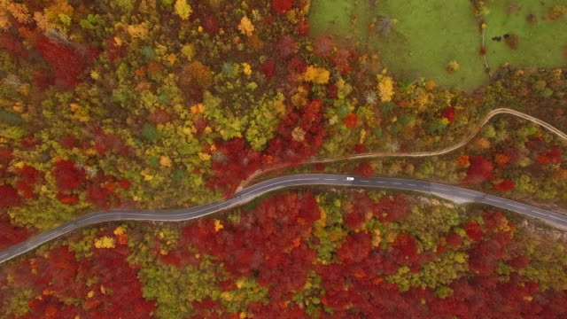 Aerial view of curvy road on the mountain 4K video