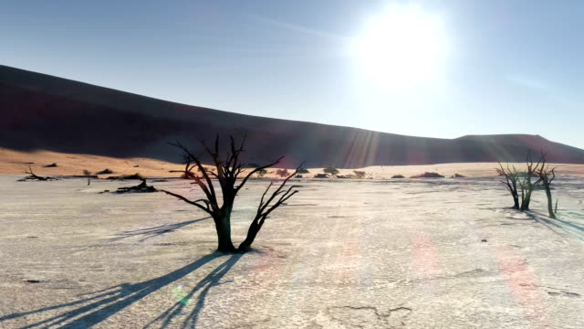 aerial view of dead vlei in sossusvlei - morte video stock e b–roll