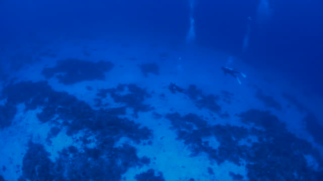Aerial view of deep sea floor, scuba diving Apo Reef, Mindoro, Philippines.  ocean floor stock videos & royalty-free footage