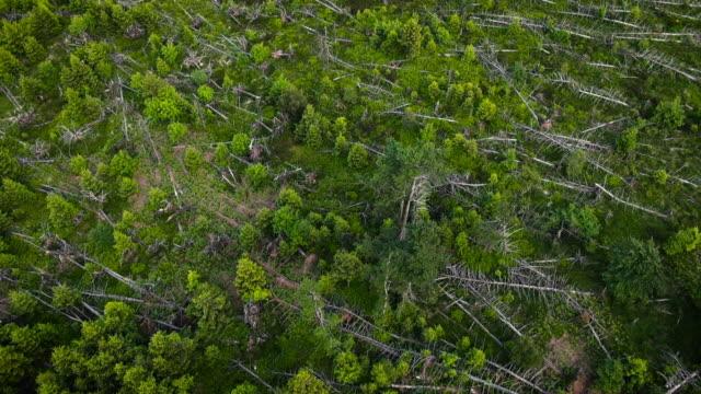 stockvideo's en b-roll-footage met luchtfoto van ontbossing - minder dan 10 seconden