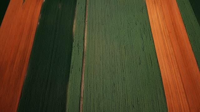 vídeos de stock e filmes b-roll de aerial view of different agricultural crops - colher atividade agrícola
