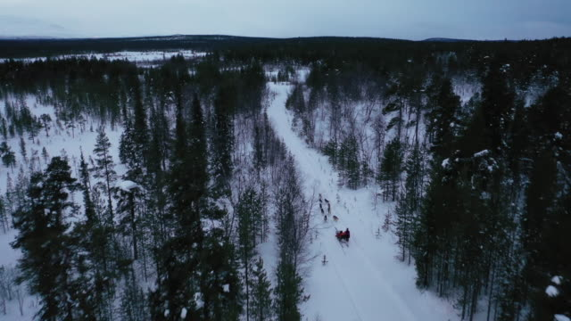 aerial view of dog sledding on deep snow forest in winter season - cane husky video stock e b–roll