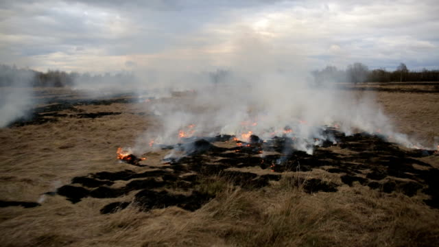 Aerial view of dry grass burning on the farmland video