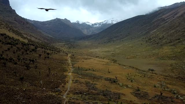 vídeos de stock e filmes b-roll de aerial view of eagle flying above beautiful valley in mountains in kenya - quénia