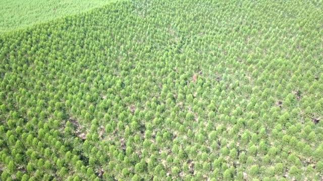flygfoto över eucalyptus park - eucalyptus leaves bildbanksvideor och videomaterial från bakom kulisserna