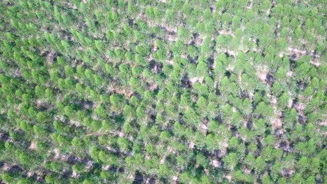Aerial view of Eucalyptus Park