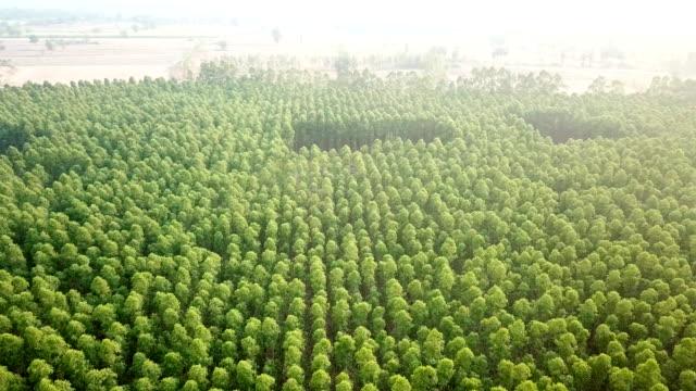 flygbild över eukalyptusträd i växten - eucalyptus leaves bildbanksvideor och videomaterial från bakom kulisserna