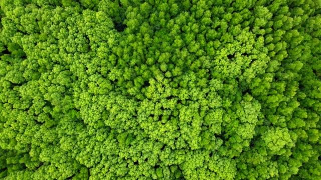 veduta aerea dell'albero di evegreen e dell'albero di mangrovie in thailandia - macrofotografia video stock e b–roll