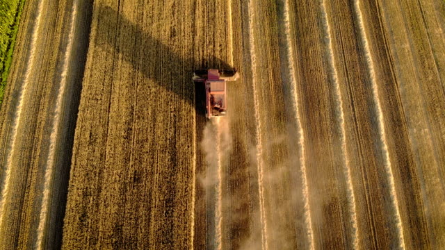 Aerial view of farmer on combine harvester mows wheat in field during harvesting Aerial view of farmer on combine harvester mows wheat in field during harvesting. Drone shot of autumn agricultural work and concept of food industry barley stock videos & royalty-free footage