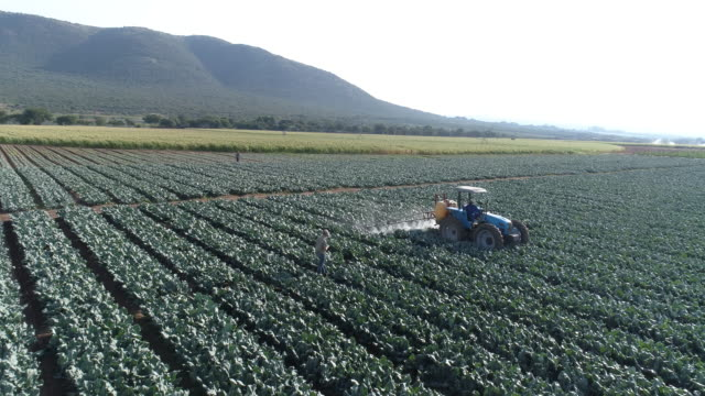 aerial view of farmer using digital tablet and monitoring a tractor spraying pesticide on crops - insetticida video stock e b–roll