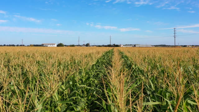 vídeos de stock e filmes b-roll de aerial view of farmland in california - corn