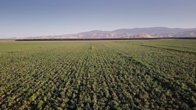 4K Aerial View of Farmland in San Joaquin Valley