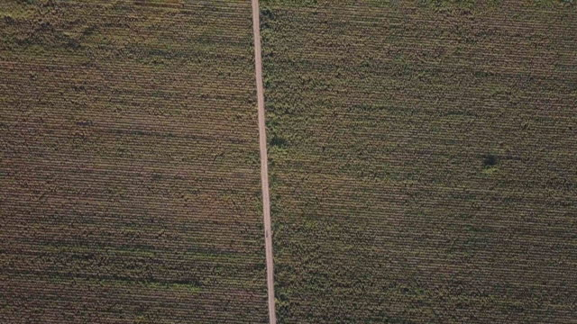4K Aerial View of Farmland in San Joaquin Valley with I-5 video