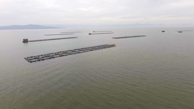 Aerial View of Fish Farming in Lake with Drone. video