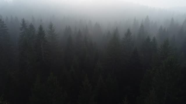 Aerial View of Foggy Forest
