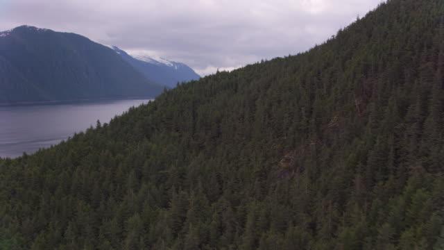 aerial view of forest and bay near juneau, alaska. - alaska stato usa video stock e b–roll
