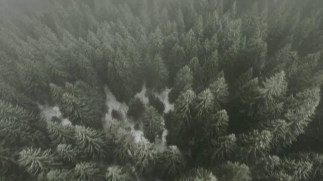widok z lotu ptaka na las pokryty śniegiem i mgłą - jodła filmów i materiałów b-roll