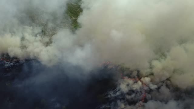 Aerial view of Forest Fire or WildFire, burning dry grass and trees, natural disaster video