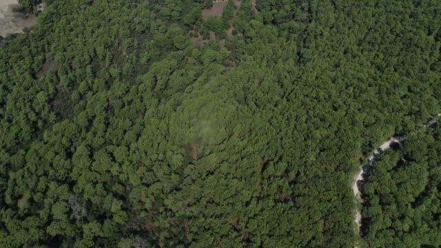 Aerial view of Forest in the 'Patara' region/Antalya Antalya/Turkey 11/14/2018