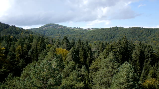 Aerial view of forest in the summer video