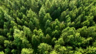 istock Aerial view of forest. Part2 473246731