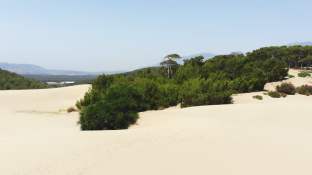 Aerial View of Forest Sand Dune and Forest in Patara, Antalya