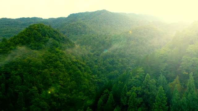 aerial view of forest - landscape video stock e b–roll