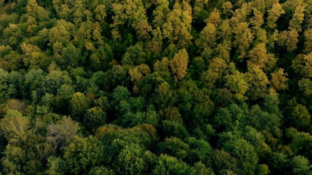 utsikt över skogen - viadukt bildbanksvideor och videomaterial från bakom kulisserna