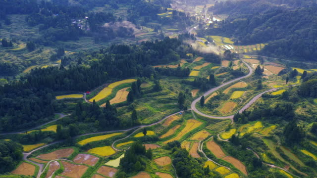 aerial view of golden terrace rice field in hoshitoge, niigata, japan - taras ryżowy filmów i materiałów b-roll
