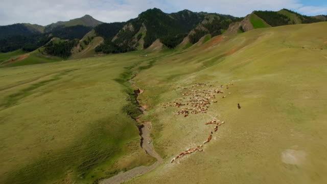 中国新疆天山の草原の空中写真。 - 牧畜場点の映像素材/bロール