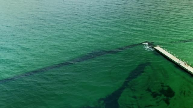 Aerial view of green colored sea and pier video