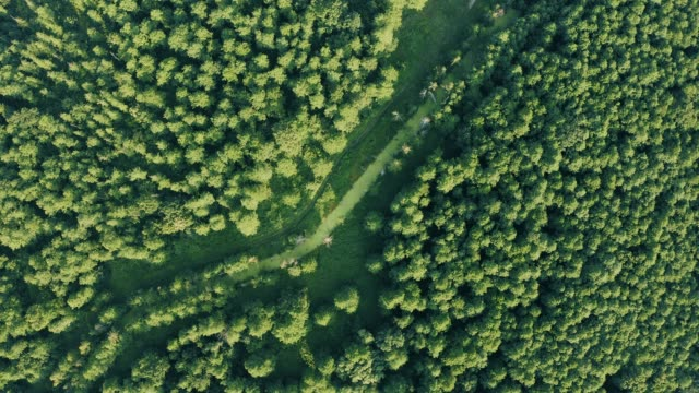 Aerial View Of Green Forest Landscape. Top View From High Attitude In Summer Evening. Small Marsh Bog In Mixed Forest. Drone View. Bird's Eye View
