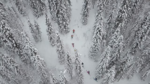 aerial view of group of skiers touring up mountain - sci video stock e b–roll