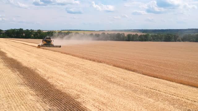 vídeos de stock, filmes e b-roll de vista aérea da colheitadeira colhendo cultura de trigo em terras agrícolas. combine trabalhar na fazenda durante a colheita. bela paisagem rural com grande campo ao fundo. conceito de agronomia. - multicóptero