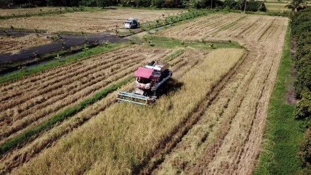 aerial view of harvesting corn agriculture concept - attività agricola video stock e b–roll