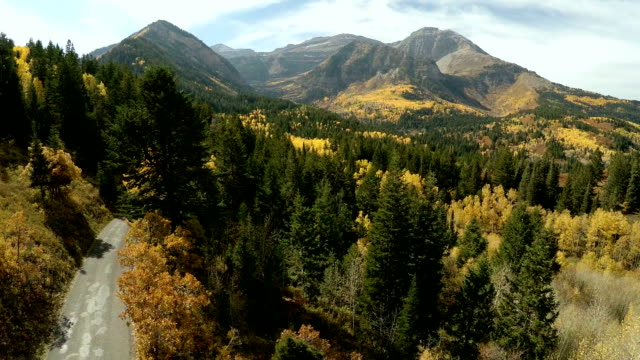 Aerial view of high elevation forest and road mountain peak Aerial view of backside of Timpanogos Mountain on the Timpanokee trail.  Flying back through the trees with majestic rocky mountain in the background. utah stock videos & royalty-free footage
