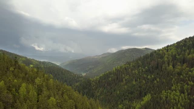 vídeos y material grabado en eventos de stock de vista aérea de altas montañas cubiertas de bosque de abetos verdes en clima nublado de verano. - pino conífera