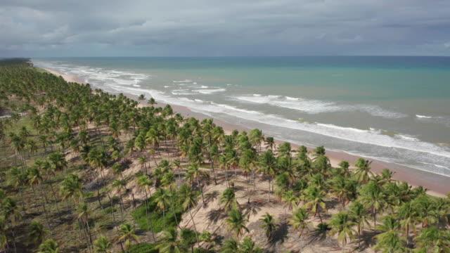vídeos de stock, filmes e b-roll de vista aérea de imbassai, bahia, brasil - nordeste